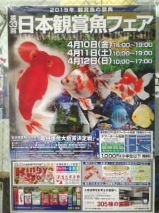 2015-04-10-11-27-38_deco